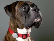 Pet GPS Tracking